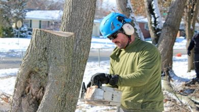 Photo of Why Hire a Certified Arborist
