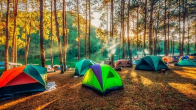 Photo of Essential Camping Tips for Beginners