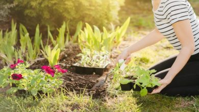 Photo of HOW TO TRANSFORM A GARDEN ON A BUDGET USING DISCOUNT CODE