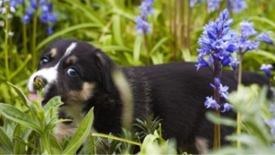 Photo of How to create a pet-friendly garden